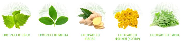 Съставките на Bactefort