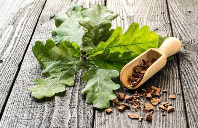 дъбово листо и дъбови кори